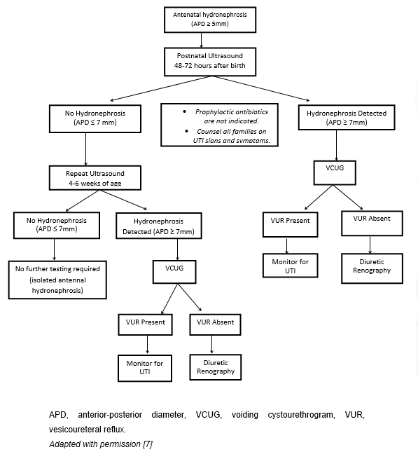 Algorithm for postnatal evaluation of antenatal hydronephrosis