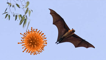 Nipah Virus Infection - Patient Education